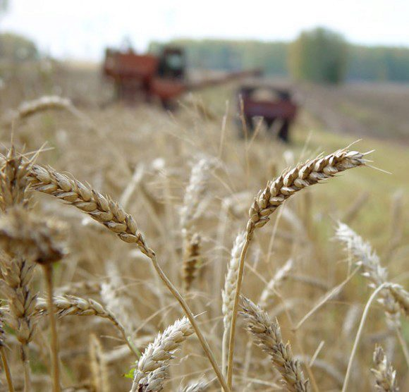 Украинское зерно